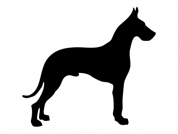 Duitse dog met diepe borstkas